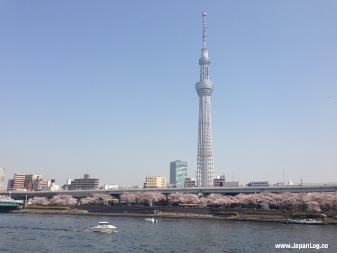 Skytree & Sakura